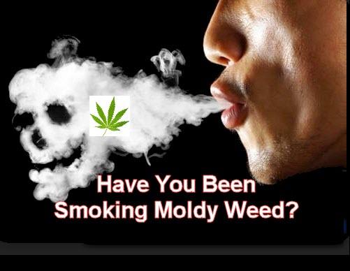 SMOKING MOLDY WEED