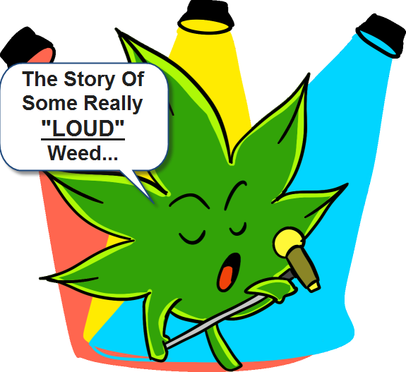 LOUD WEED CANNABIS