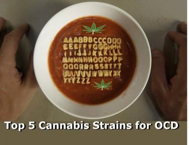 CANNABIS STRAINS FOR OCD