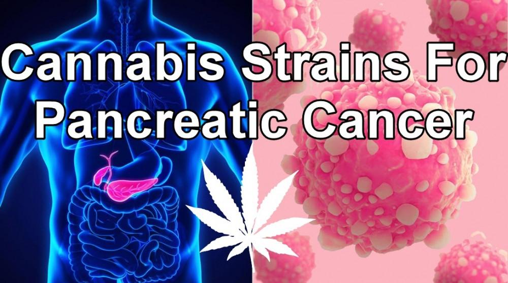 MARIJUANA STRAINS FOR PANCREATIC CANCER