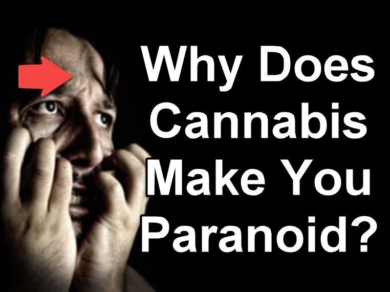WHY DOES WEED MAKE YOU PARANOID