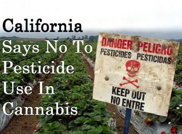PESTICIDES IN CALIFORNIA MARIJUANA GROWING