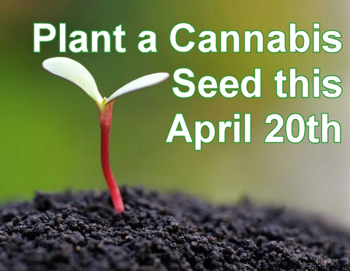 PLANT A CANNABIS SEED ON 4/20