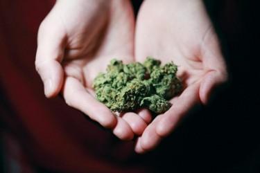 weed life