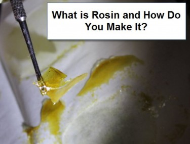WHAT IS LIVE ROSIN