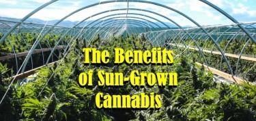 SUN GROWN CANNABIS BENEFITS