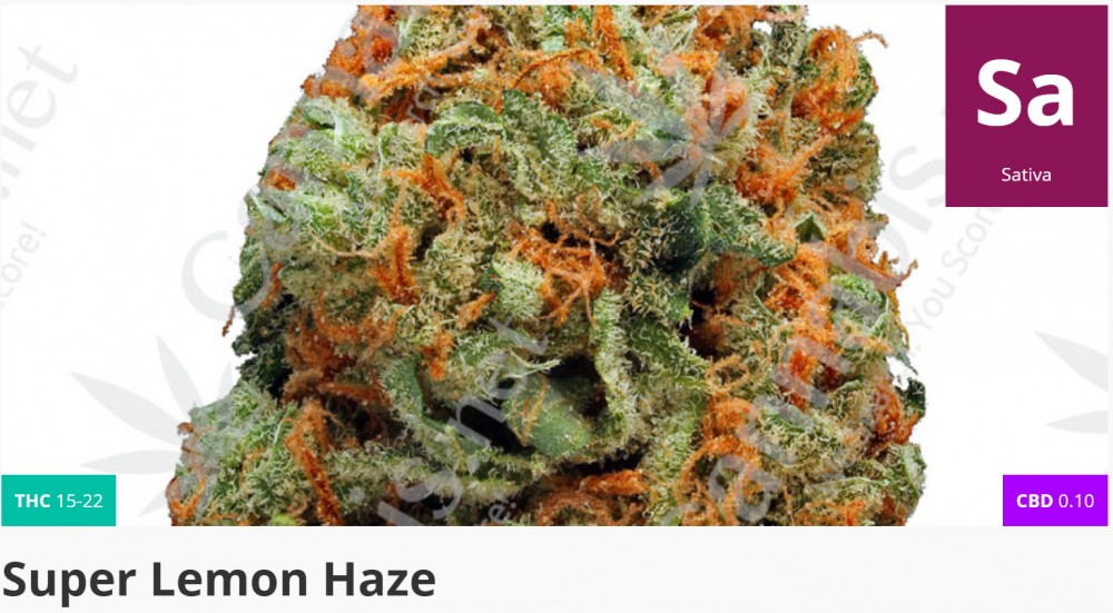 super lemon haze marijuana
