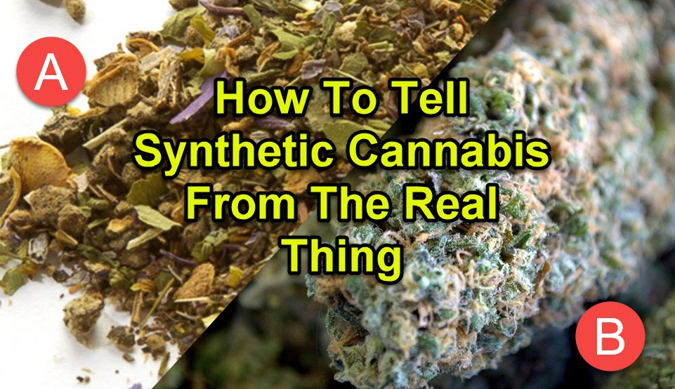 cannabis verse synthetic cannabis