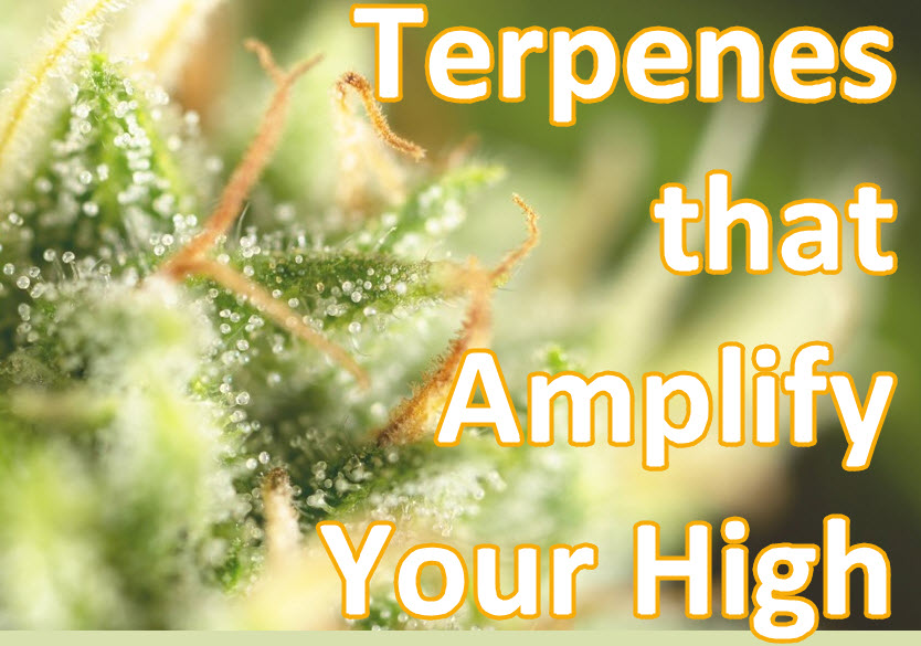 TERPENES THAT MAKE YOU HIGH