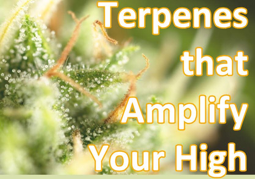 TERPENES THAT MAKE YOU HIGH