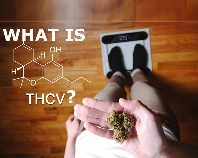 WHAT IS THCV FOR DIABETES AND WEIGHT LOSS