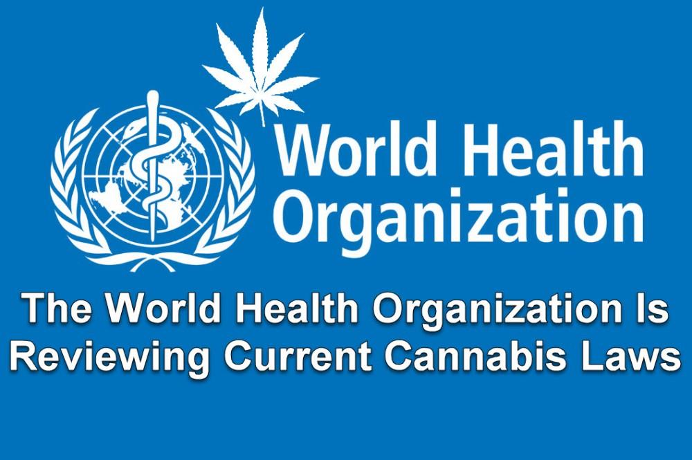 who on cannabis