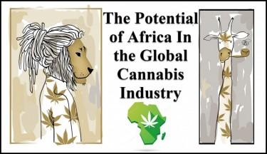 AFRICAN MARIJUANA INDUSTRY