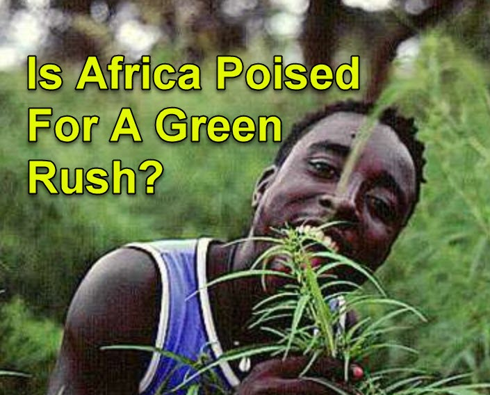 africa weed rush