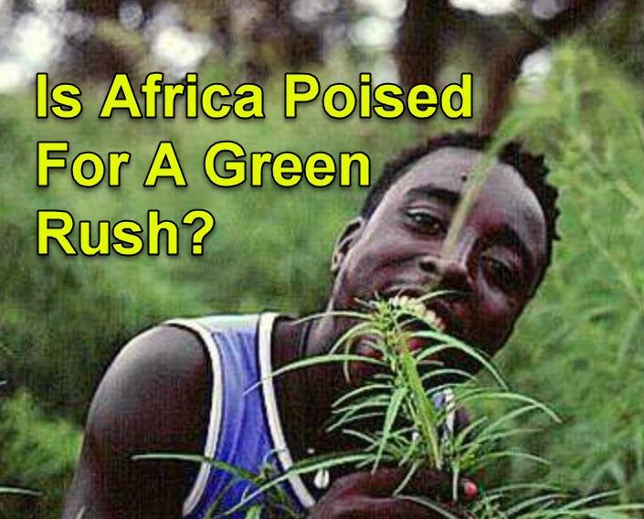 AFRICA AND MEDICAL MARIJUANA CANNABIS