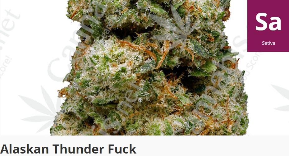 alaska thunder fuck cannabis