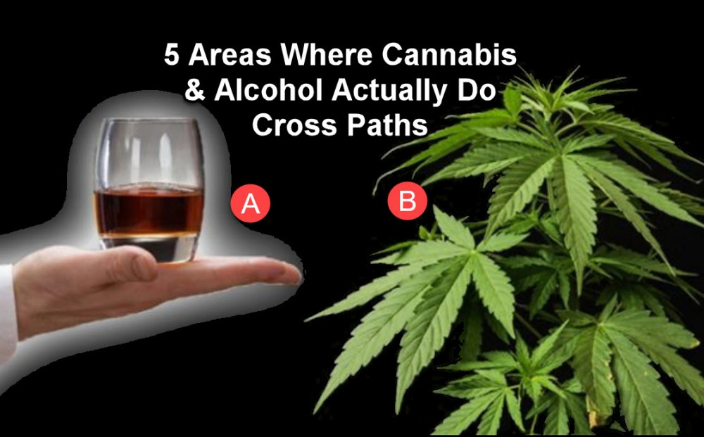 alcohol and cannabis studies