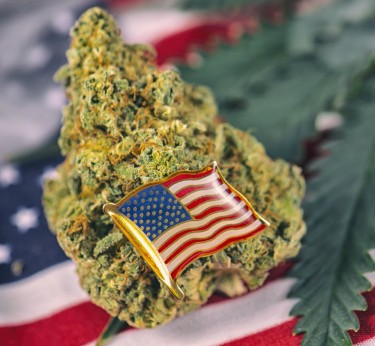 LEGALIZE CANNABIS STATE BY STATE OR FEDERALLY