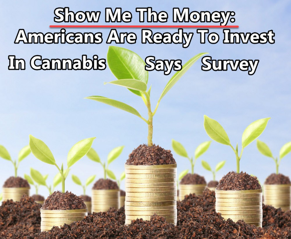 americans in cannabis