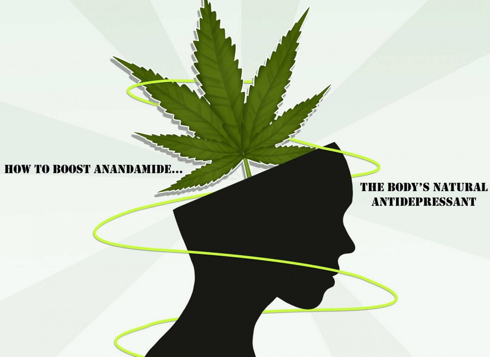 Anandamide thc and antidepressant
