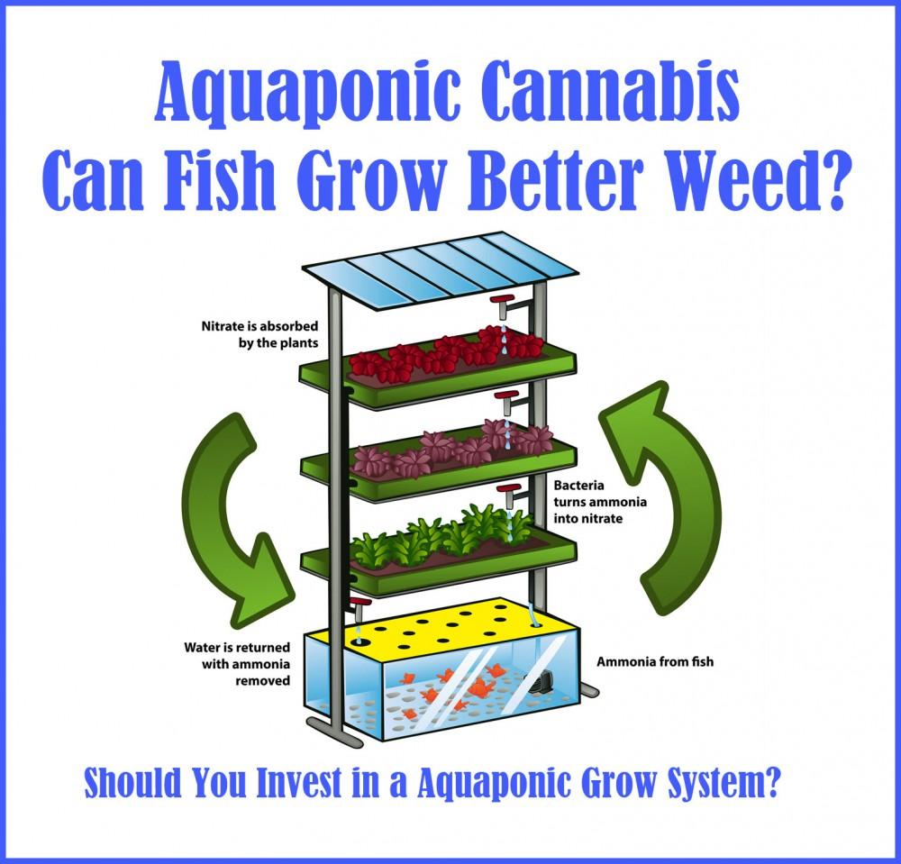 aquaponics marijuana grow systems