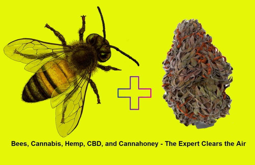 CANNA HONEY AND BEES ON MARIJUANA PLANTS