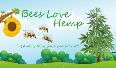 WHY DO BEES LOVE HEMP