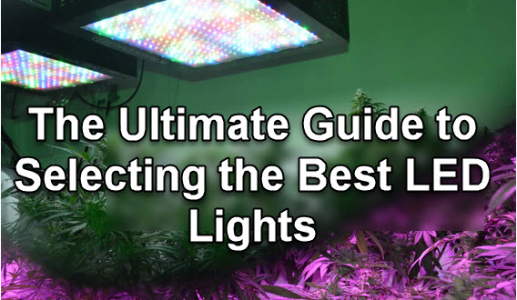 LED CANNABIS GROW LIGHT REVIEWS