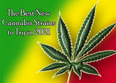 5 Exciting Cannabis Strains to Look Forward to in 2021