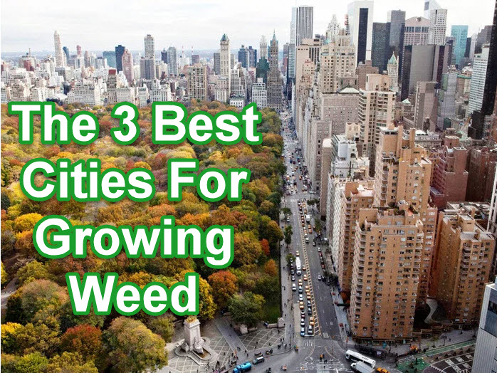 best cities to grow weed