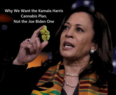KAMALA HARRIS ON WEED
