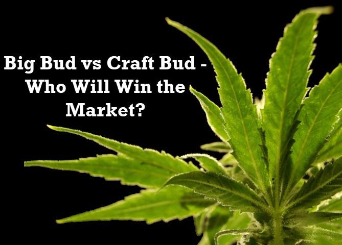 big bud or craft cannabis bud