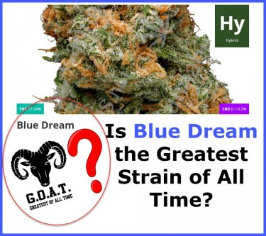 BLUE DREAM CANNABIS STRAINS