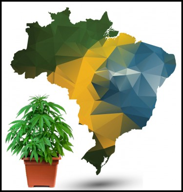 brazil moves to legalize marijuana