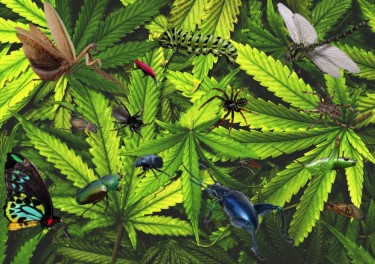 HOW DO YOU KEEP BUGS ON WEED PLANTS