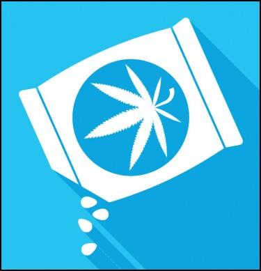 buy marijuana seeds in the usa