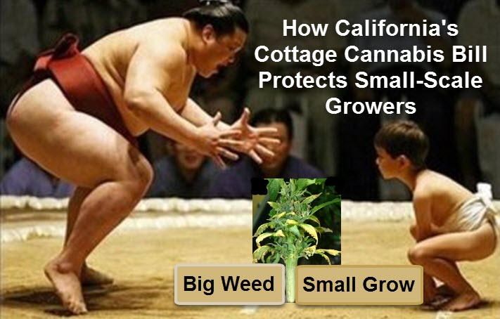 California Cottage Marijuana Growers Bill