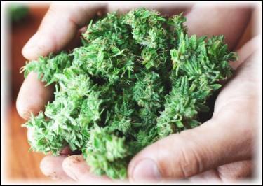 california hemp laws