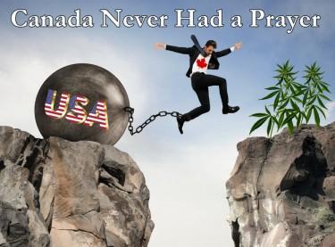 CANADIAN MARIJUANA INTERNATIONAL MARKETS