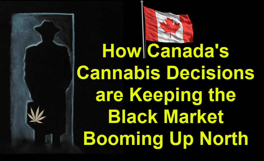 canadian black market cananbis