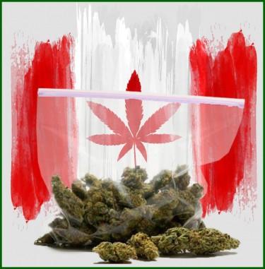 Canadian marijuana sales