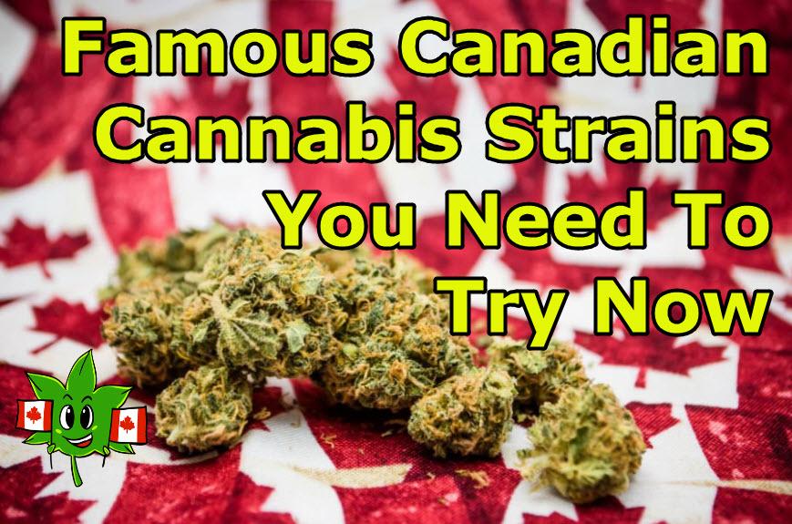 canadian cannabis strains