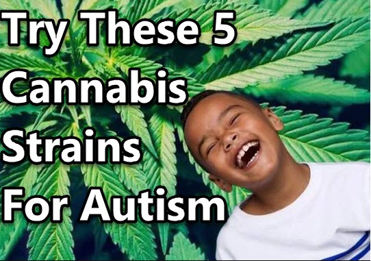 CANNABIS STRAINS FOR AUTISM