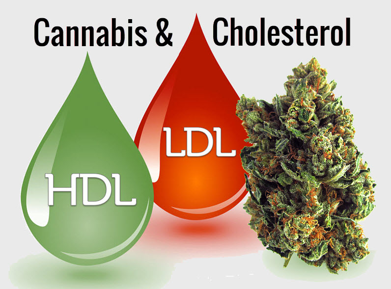 cananbisforcholesterol - Can Cannabis Help Balance Cholesterol Levels? - A Detailed Breakdown of Weed and Cholesterol Readings