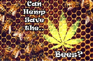 can hemp save the bees