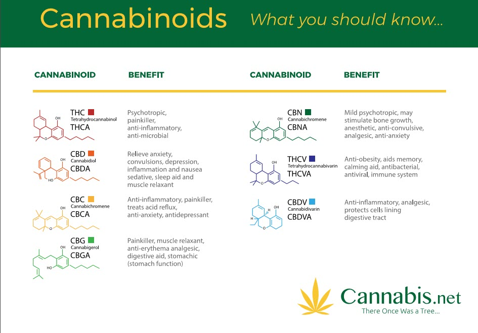 what is a cannabinoid