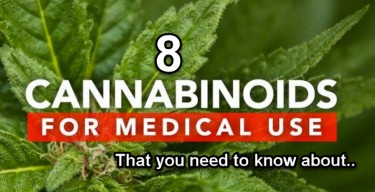 CANNABINOIDS THAT INTERACT WITH YOUR BODY