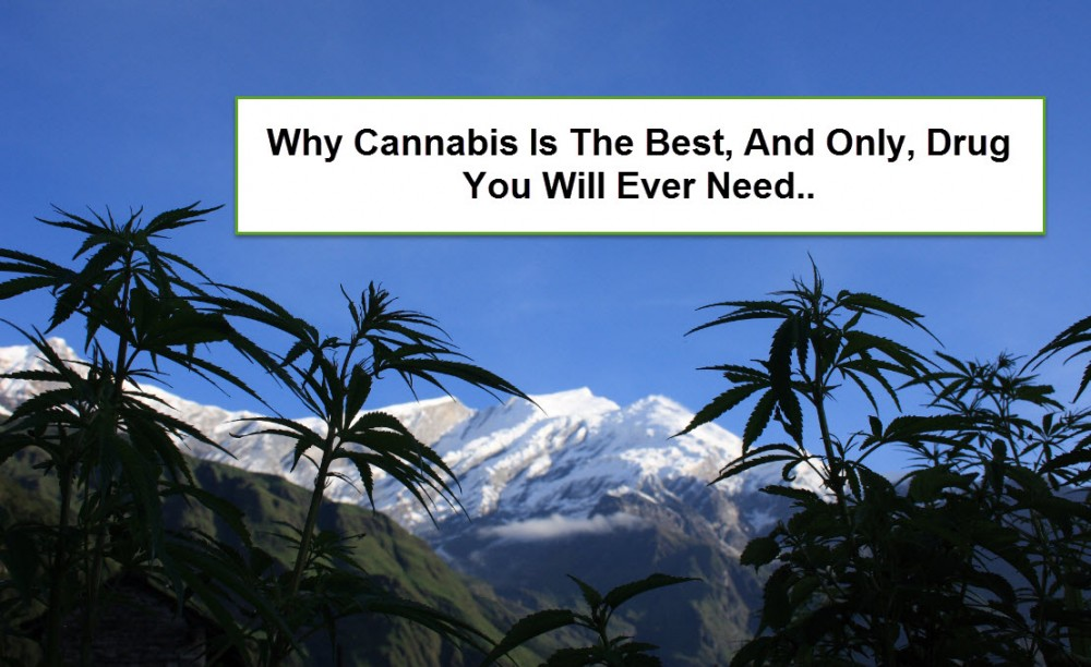 CANNABIS IS THE ONLY DRUG YOU NEED