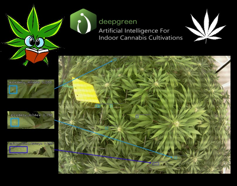 cannabis ai programs