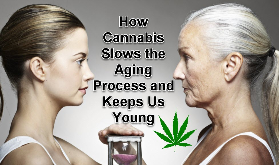 HOW CANNABIS SLOWS THE AGING PROCESS